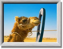 colour camel