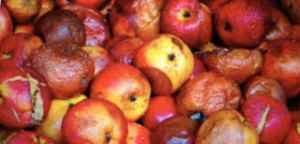 More than a few bad apples